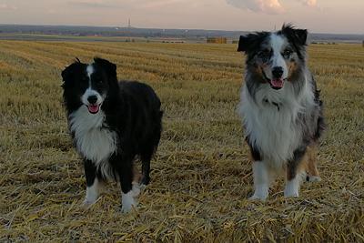 Mounty & Spike